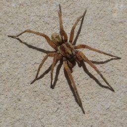 Уничтожение пауков в Севастополе